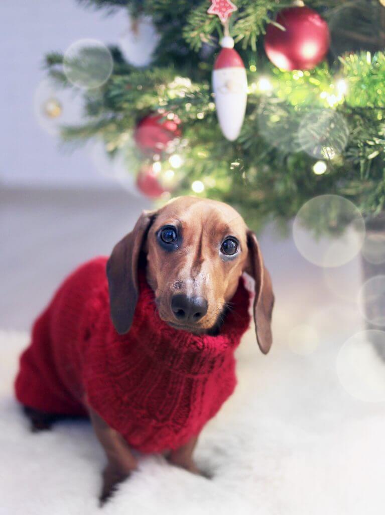 Taxen Berra under julgranen