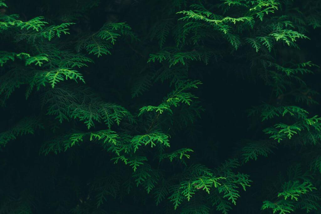 En promenad i skogen: bästa botemedlet mot stress!