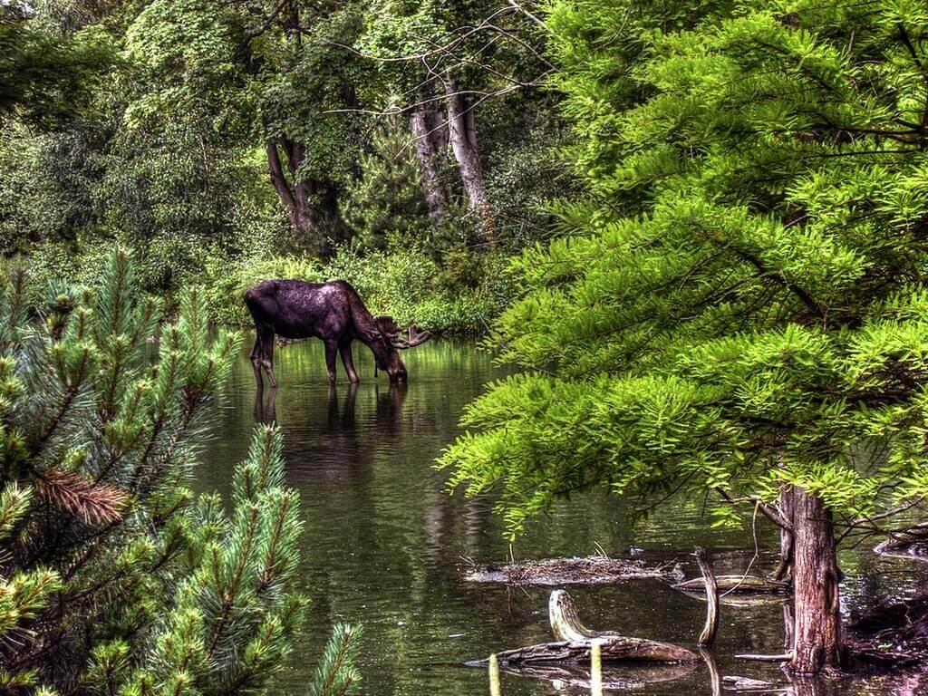 Älg: Alltid lika spännande att stöta på vilt i skogen.